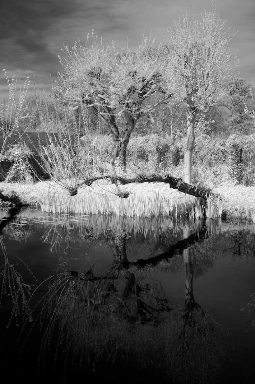 A pond viewed in infrared.