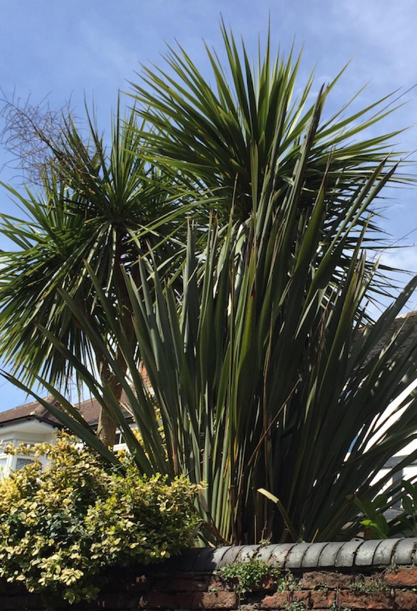 Ferns captured in visible light.