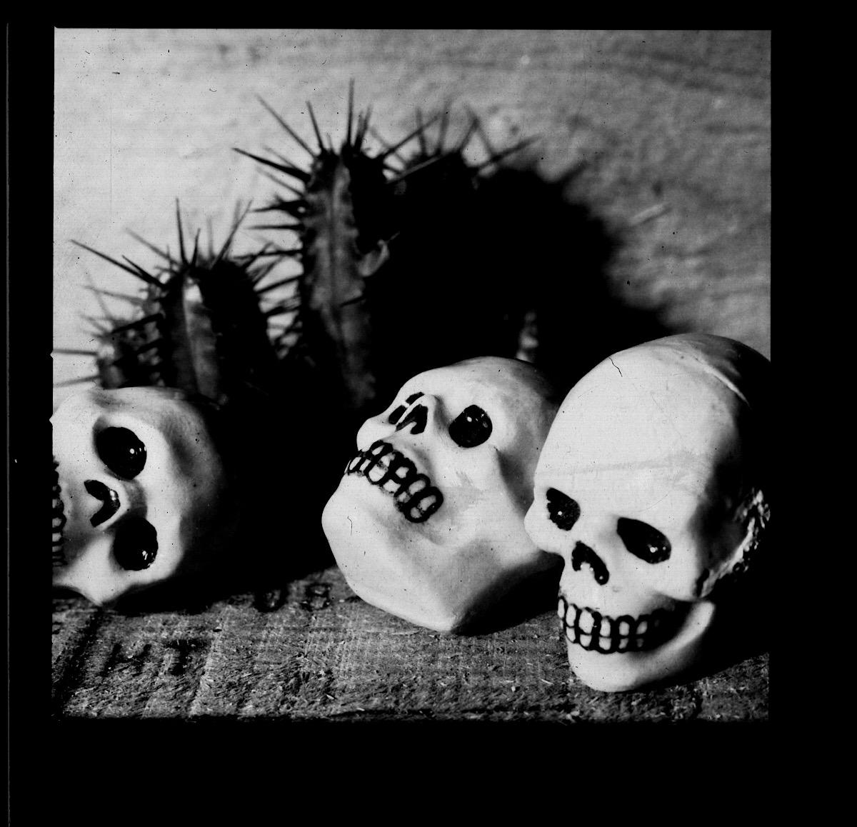 Ceramic skulls and miniature cactus on paper negative.