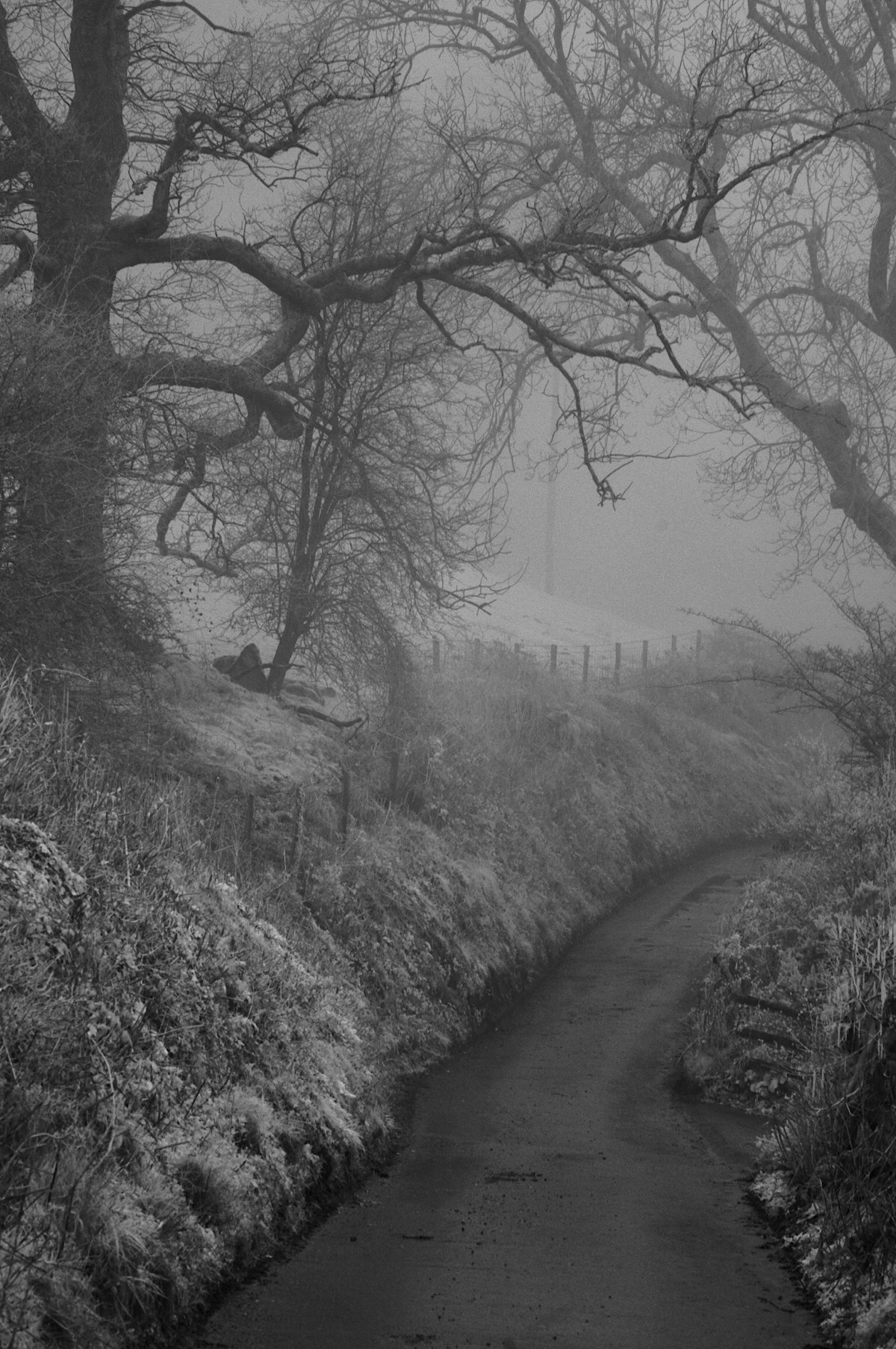 Welsh Fog in Infrared, a lane in the Vallies.
