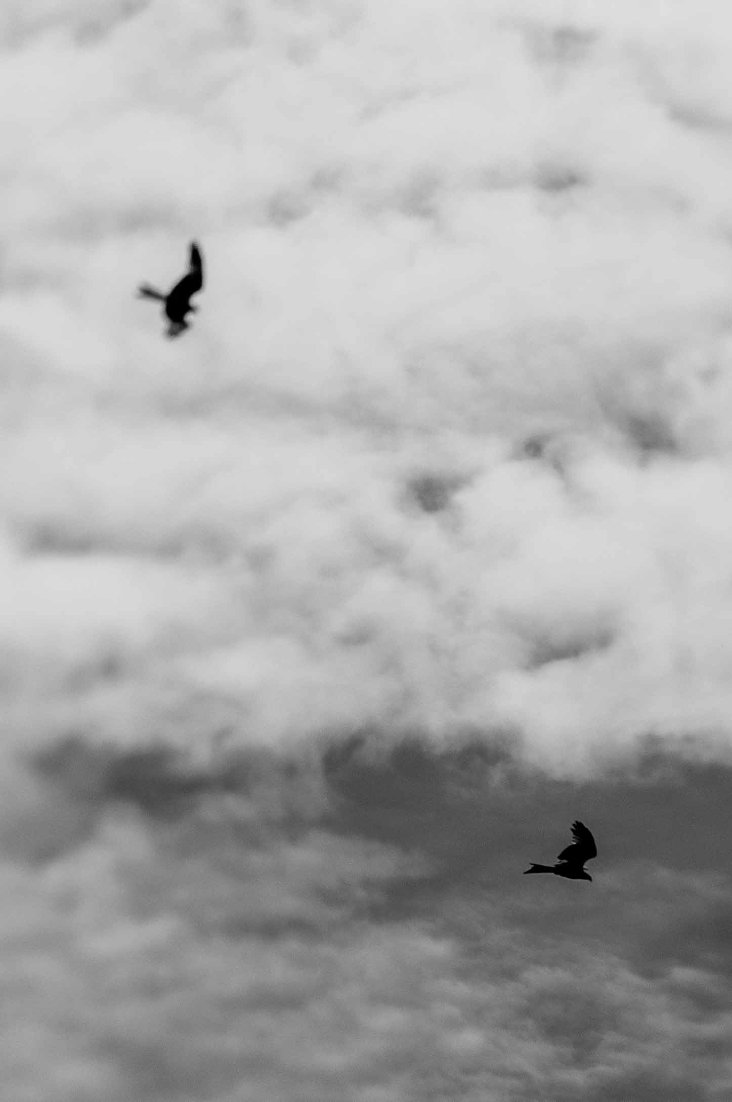 D90 with LensBaby Edge80Optic. Red Kites in the air.