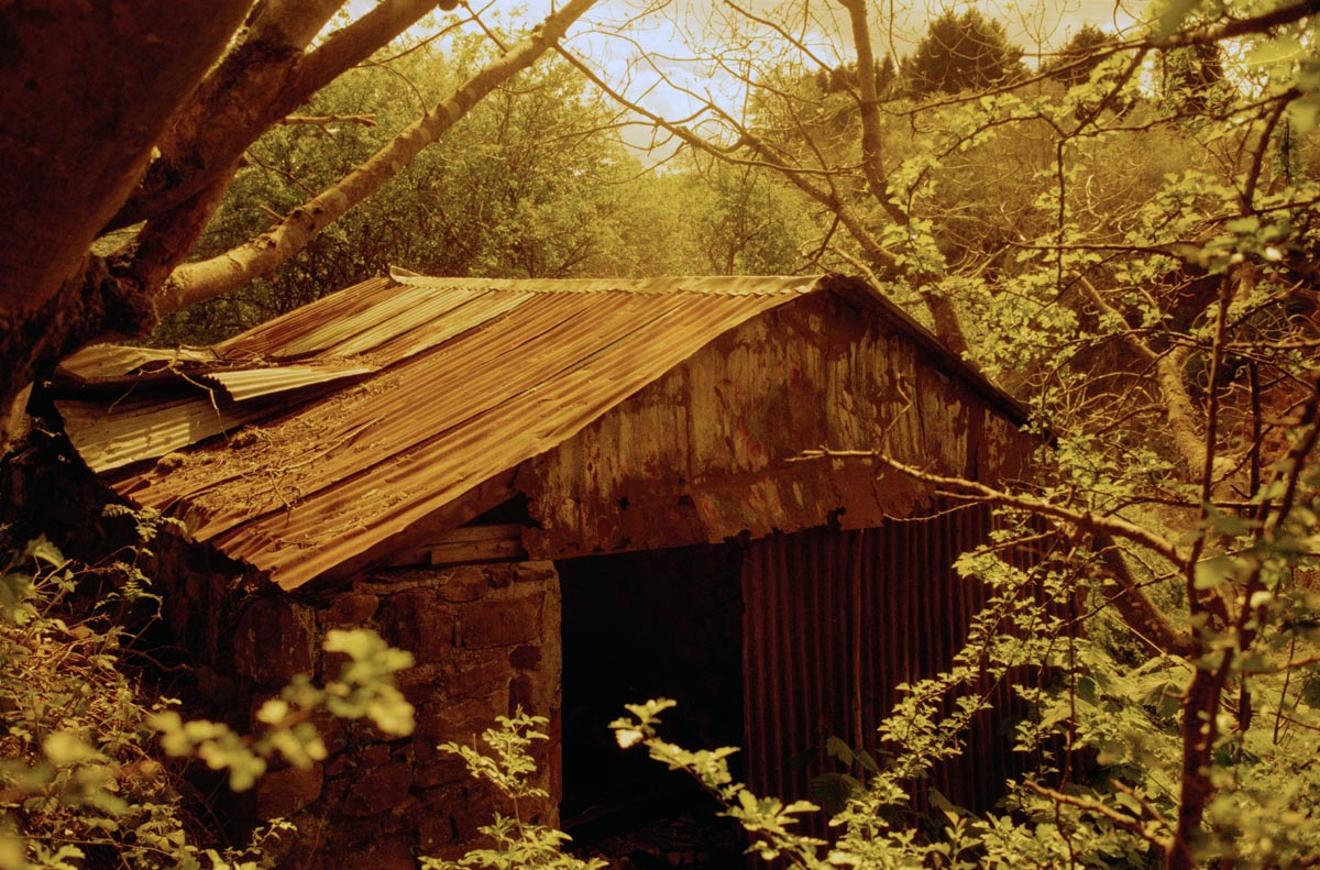 Redscale image of a derelict building.
