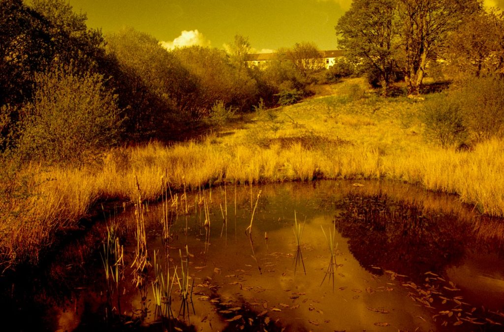 Redscale image of a nature pond.