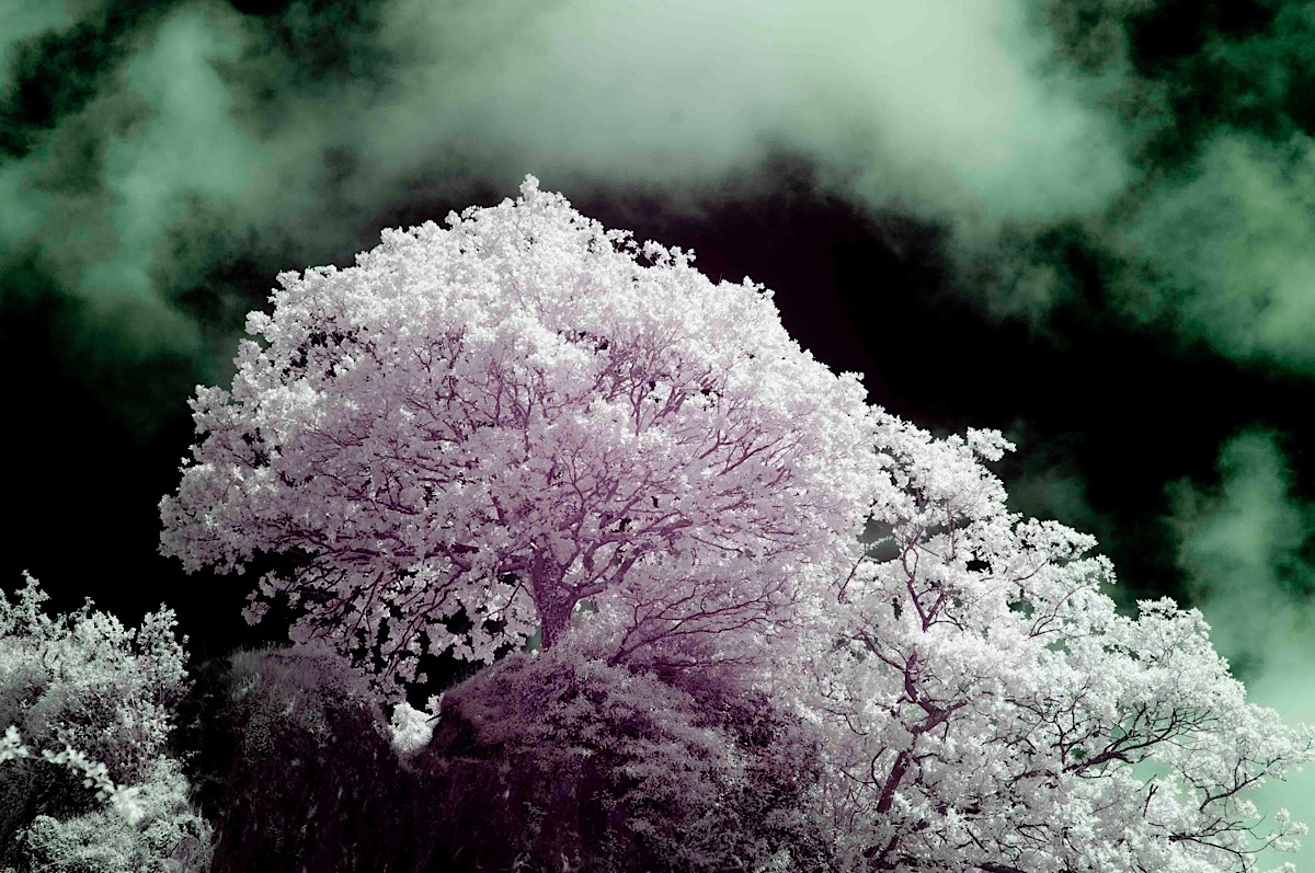 Tree and Sky Infrared