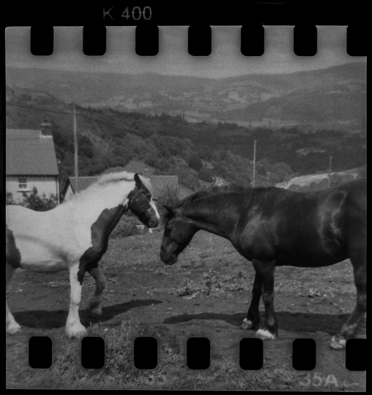 Two horses shot with a Bencini Comet S 127 format camera.